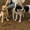 FRASER (puppie), MICKIE (pup)_2