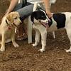 FRASER (puppie), MICKIE (pup)_1