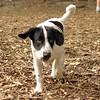MICKIE (b&W pup)_3