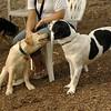 FRASER (puppie), MICKIE (pup)_3