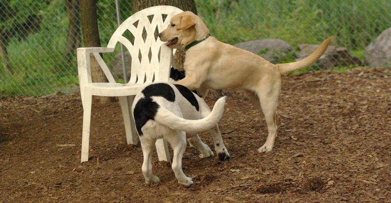 FRASER (puppie), MICKIE (pup)_5