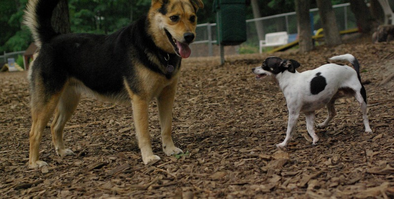 PACO (chihauhau) & Maddie_18