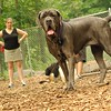 CARTER mastiff girl_12