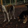 Chase (greyhound), Maddie_3