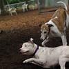 CHASE (greyhound), POWDER_6