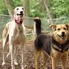 Chase (greyhound), Maddie_7