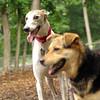 Chase (greyhound), Maddie_4