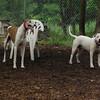 CHASE (greyhound), POWDER_5