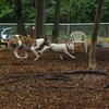 CHASE (greyhound), POWDER_3