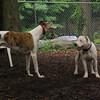 CHASE (greyhound), POWDER_16