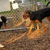 MICKIE & SAMMY (hound boys)_2