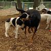 MICKIE & SAMMY (hound boys)_1