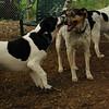 CALI, MICKIE (hounds)_2