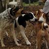 CALI, MICKIE (hounds)_4
