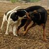 MICKIE & SAMMY (hound boys)_3
