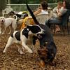MICKIE & SAMMY (hound boys)_4