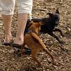 Paco (minpin), Faith (terrier)_1