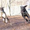 AXEL (boxer), CHARLIE (black hound like)
