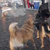 HARLEY (dane) & MIJO 2