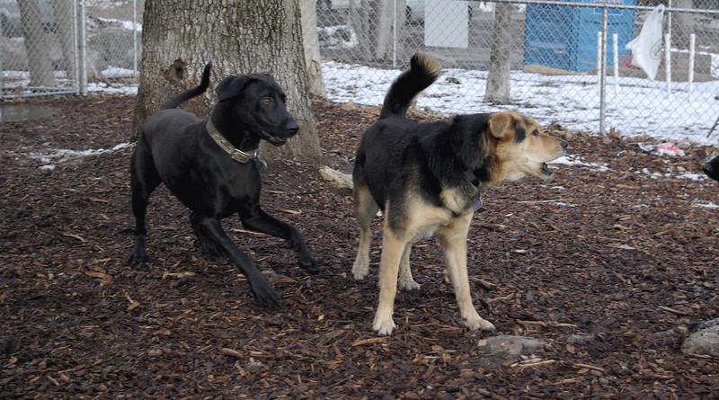 CHARLIE (black, hound-like), MADDIE