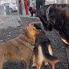 HARLEY (dane) & MIJO 3