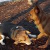CHELSEA (beagle), MIJO