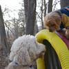 BERNI (goldendoodle), CHANDLER (tube)