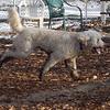 BERNIE (roots dog)