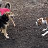 BUBBA (boxer pup), Maddie, Faith