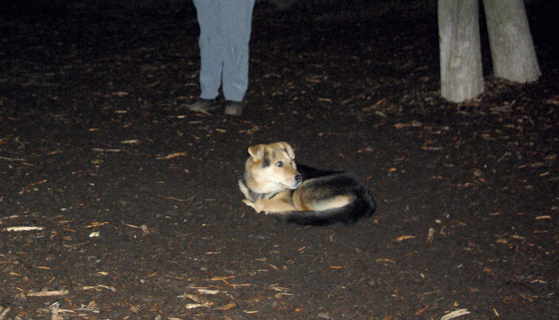 MADDIE (fox hole)