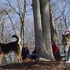 CHASE (greyhound) & MADDIE.jpg