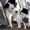 MARLEY (boy pup), Sophie (concern).jpg