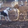 MAGGIE (foxhound bc mix), DUTCH 4.jpg