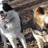 MARLEY (boy pup) & MADDIE 2.jpg