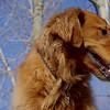 DAKOTA (golden boy) 2.jpg