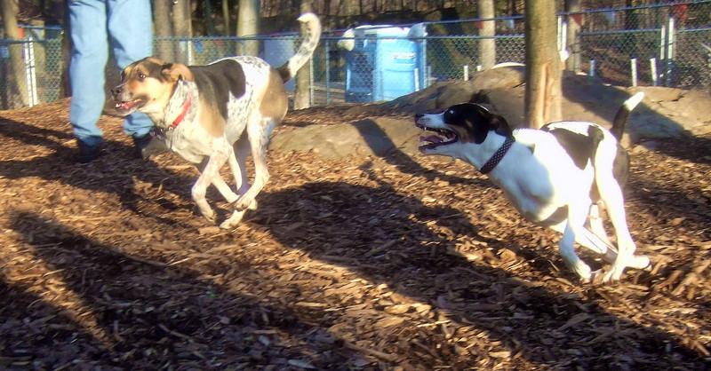 CALI & MAGGIE (foxhound, bc mix).jpg
