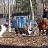 Eli (new aussie) , Bud, Rocky, Dakota, Rex.jpg