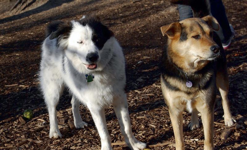 MARLEY (boy pup) & MADDIE.jpg