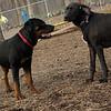 Eubie (rottweiler  pup), Mojo