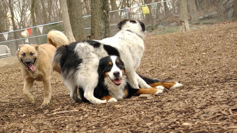 Marley (boy pup), LOLA, Robin
