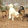 Mickey (boston terrier), maddie, bailey, moss, marley