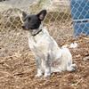 MURPHY (new pup) 2.jpg