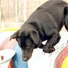 HARVEY (guide pup, wendy).JPG