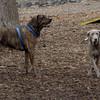 GRACIE (new) & PEPPER (plotts hound).jpg