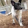 MURPHY (new pup).jpg