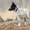MURPHY (new pup) 3.jpg