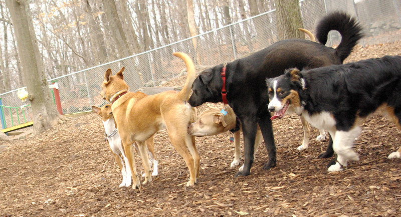 MILTON, oliver, scout, chloe, lucy.jpg