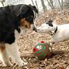 OLIVER & VIOLET (1st time , pup).JPG