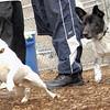 MURPHY (new pup), roger ( new pup).jpg
