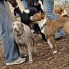 GRACIE (new), Shamus (basenji), Chloe.jpg